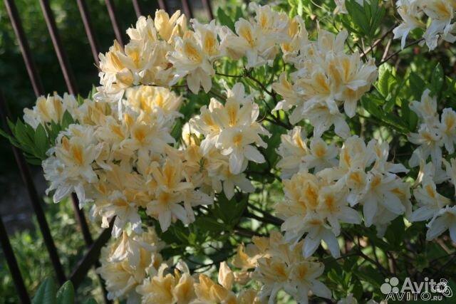Авито цветы своими руками