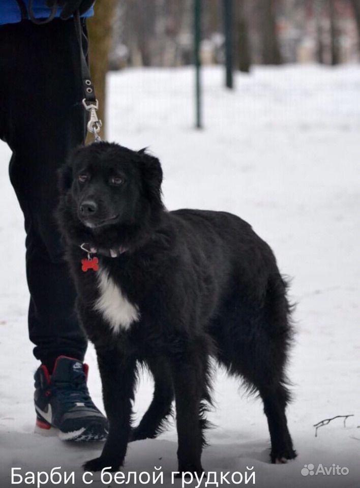 Собака в добрые руки в Москве - фотография № 3