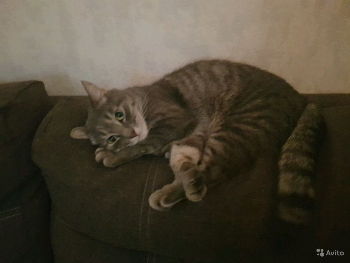 Отдадим котика в Краснодаре - фотография № 2