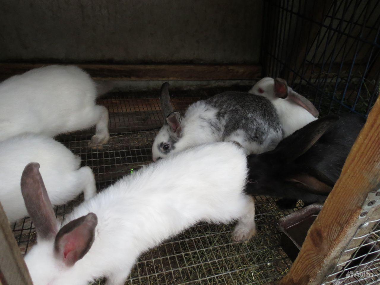 Кролики в Красноярске - фотография № 3