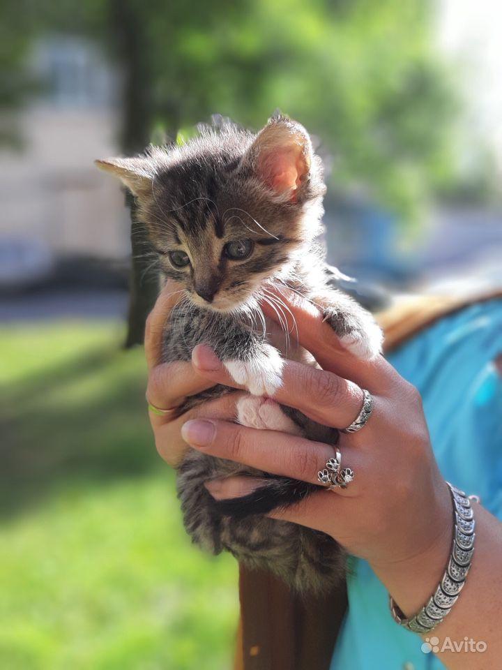 Котёнок мейн кун в Санкт-Петербурге - фотография № 2
