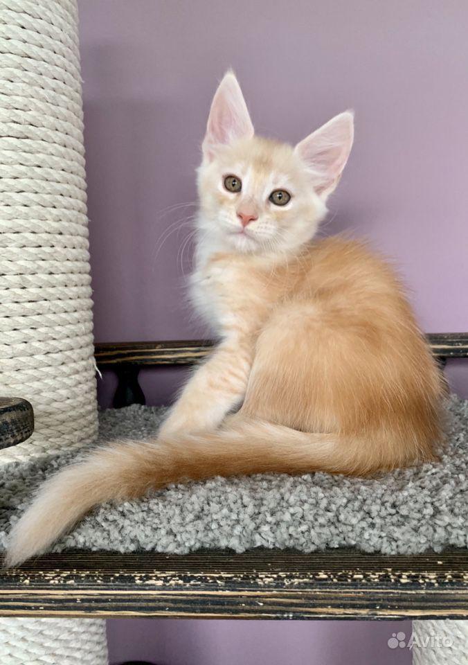 Красный дым кот