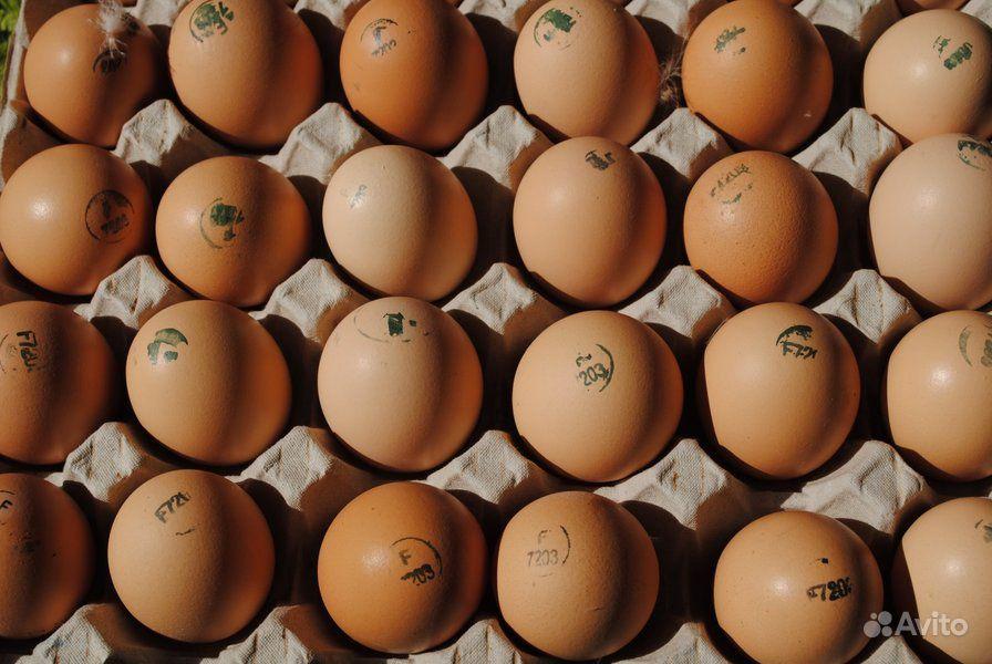 Инкубационное яйцо бройлера кобб500 и росс 308