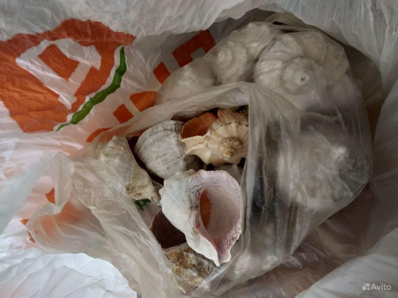 Ракушки с Чёрного моря купить на Зозу.ру - фотография № 2