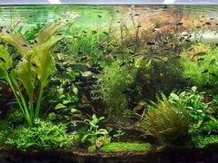 Купить аквариум на авито в москве частные объявления работа массажистка в москве свежие вакансии
