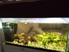 Продам аквариум 130