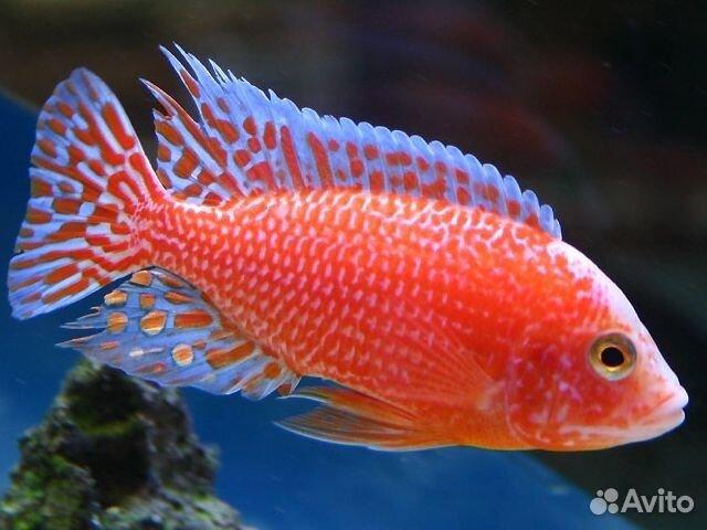 аквариум 15 л фото