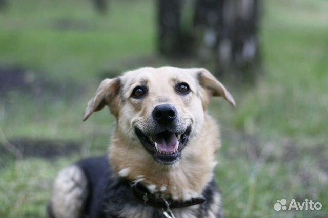 Улыбчивая собака Шелли в добрые руки купить на Зозу.ру - фотография № 5