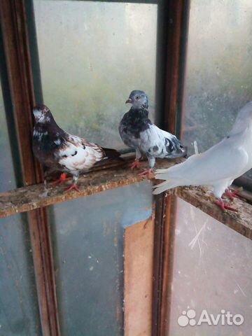 Часы голубей продам для продам часы мерседес