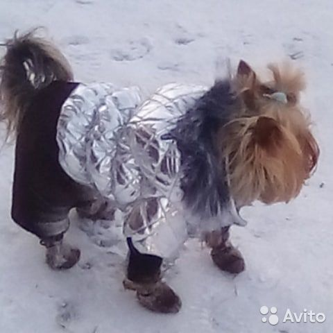 Каприз одежда для собак интернет