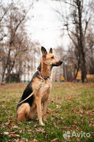 Кора ищет свою семью купить на Зозу.ру - фотография № 3