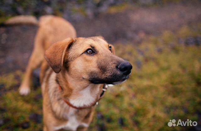 Мальчик Тиша, щенок в добрые руки, 9 месяцев купить на Зозу.ру - фотография № 4