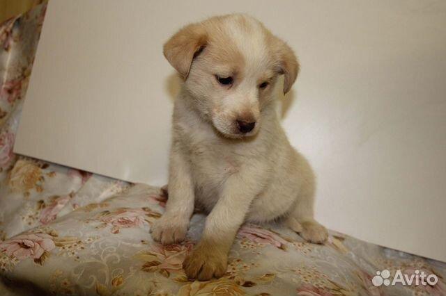 Собака купить на Зозу.ру - фотография № 7