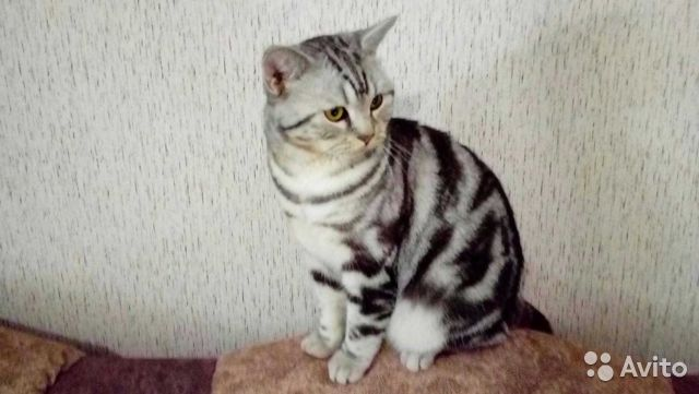 Котик ждет вас в гости пишите перезвоню