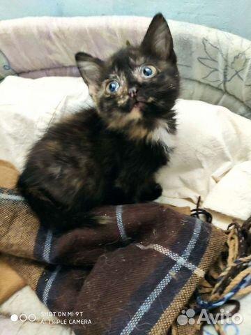 Kitten girl  buy 3