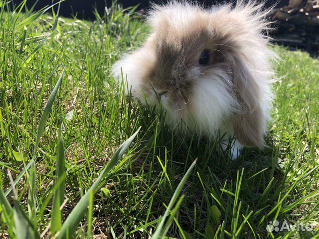 Кролик  89874952215 купить 1