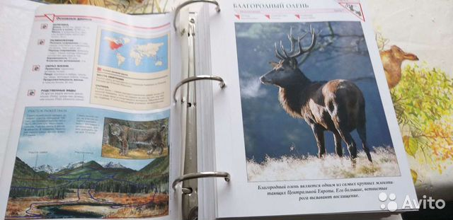 Каталоги по животному миру. 4 тома по 500р. За все  89012828080 купить 3