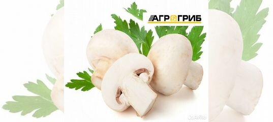 Вакансия Сборщик грибов в Тульской области | Работа | Авито