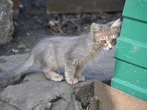 Милейший котёнок в добрые руки