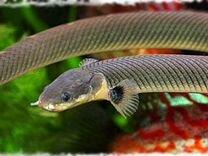 Новинки аквариумистики
