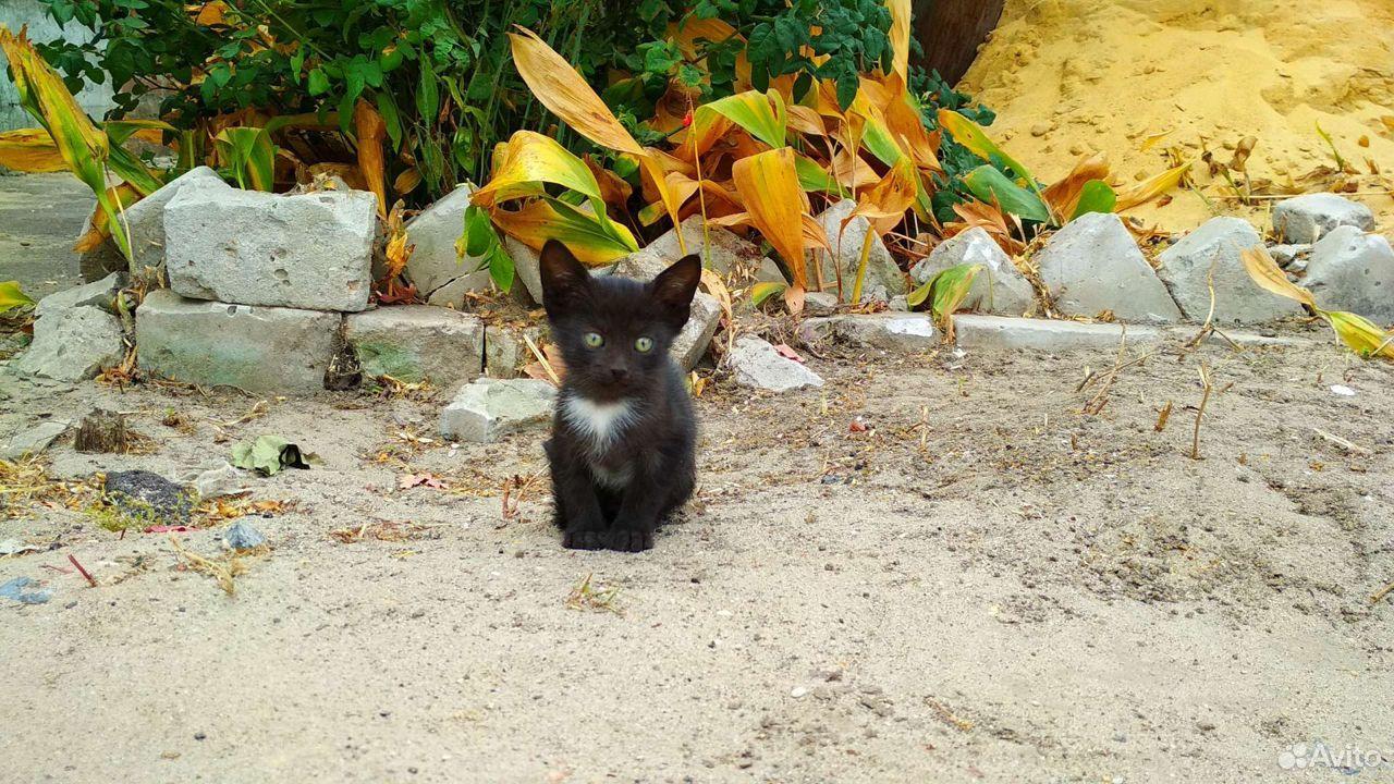 Котята, 5 очаровашек  89173308243 купить 1