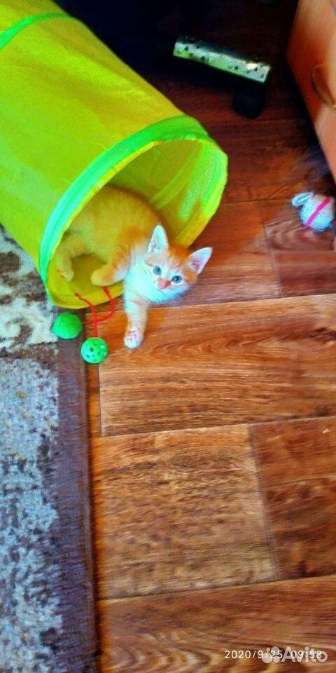 Котик рыжий  89201009090 купить 2