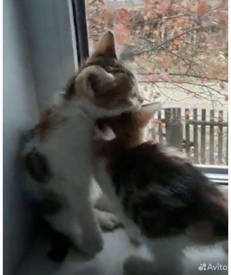 Give kitten in good hands  89379140006 buy 9