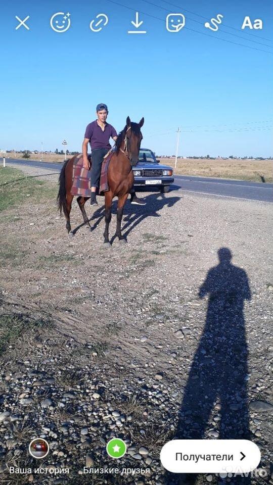 Лошадь  89635969356 купить 4