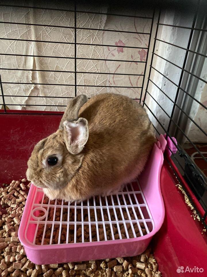 Кролик  89118726761 купить 3