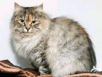Красивая и ласковая коша — Кошки в Геленджике