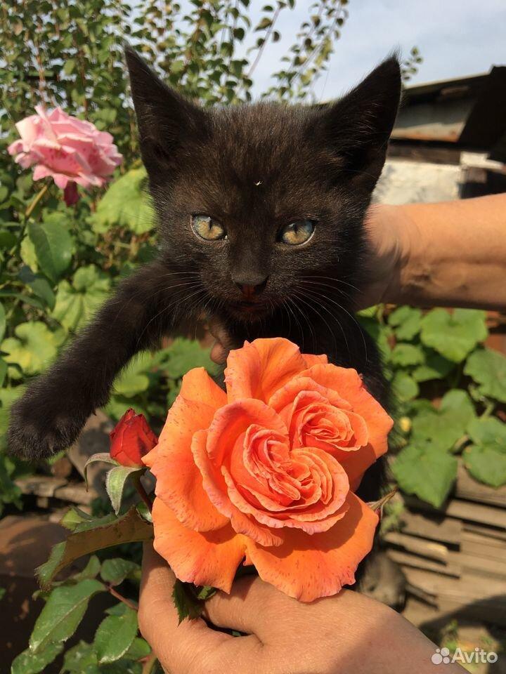 Отдам котят в добрые руки  89096353184 купить 7