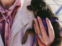 Вязка чихуахуа — Собаки в Геленджике