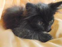 Котенок -кошечка. С доставкой на дом)