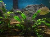 Сайдекс против водорослей