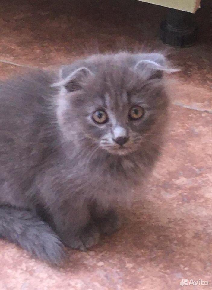 Кошка  89289797065 купить 1