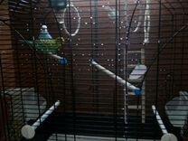 Попугаи волнистики